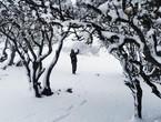 بالفيديو والصور | الجنوب يشهد الثلجة السادسة هذا الشتاء... شاهد