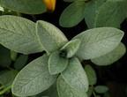 ماذا يحدث للنباتات عند الكسوف الكلي للشمس ؟