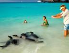 بالفيديو: جزر غالاباغوس حيث الطبيعة الأكثر إثارة في العالم