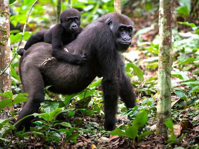 أفضل وقت للسفر ومشاهدة الحياة البرية في أوغندا