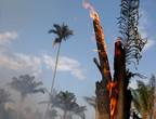 """غابات الأمازون """"رئة الأرض"""" تسجل رقماً قياسياً في الحرائق هذا العام"""