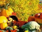 فواكه وخضار ينصح بتناولها في فصل الخريف