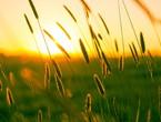 انحسار الكتلة الهوائية الحارة الخميس .. وطقس صيفي مُعتدل خلال نهاية الأسبوع
