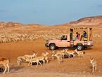 جزيرة صير بن ياس.. أفضل وجهة سياحية مستدامة في العالم