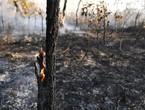 غابات الأمازون.. أهميتها وسبب الحرائق فيها
