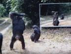 ماذا سيحدث لو وضعنا مرآة كبيرة وسط غابة مليئة بالحيوانات؟