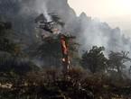 الجزائر | نداء استغاثة  لحماية غابات المداد في ثنية الحد من حرائق الغابات المشتعلة منذ أيام... شاهد الصور