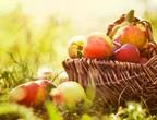 ما هي فوائد التفاح ومتى يبدأ موسم قطافه؟