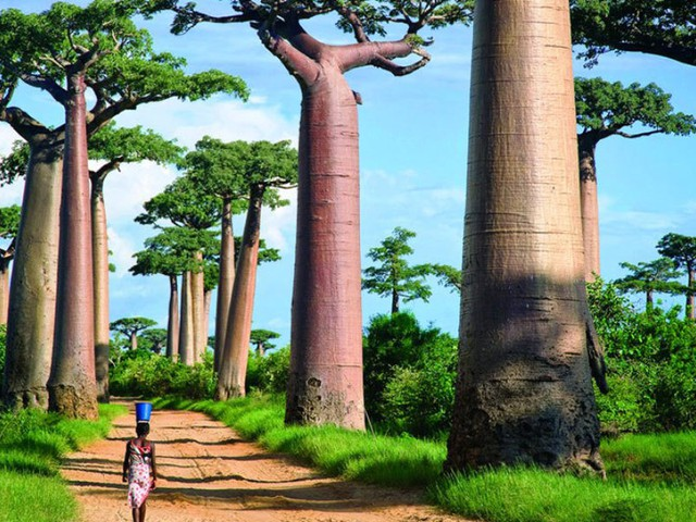 ما هو أفضل وقت للسفر إلى مدغشقر؟