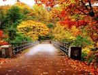 لماذا يتغير لون أوراق النباتات الي اللون الأصفر  في فصل الخريف؟