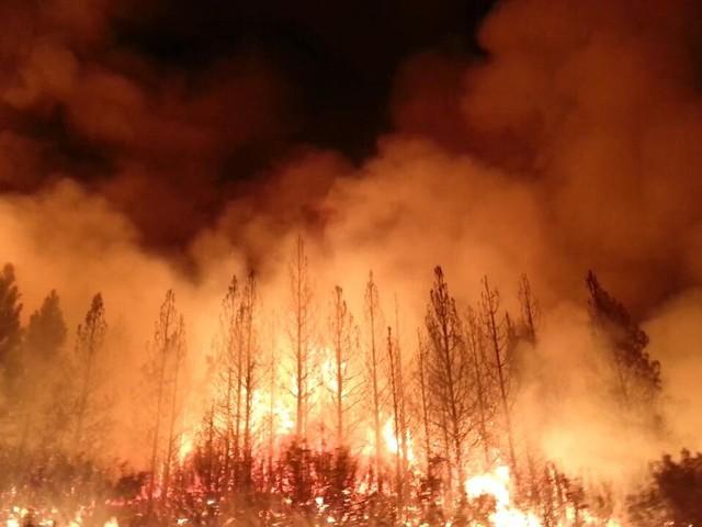 كاليفورنيا.. حريق غابات يدمر مئات المنازل ويجلي الآلاف