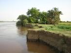 الاحتباس الحراري يهدد بإغراق جزيرة توتي السودانية