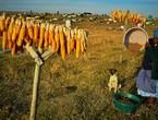 الاحتباس الحراري يهدد بانقراض أنواع من النباتات