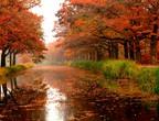 نصائح لتعزيز المناعة في فصل الخريف