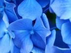 اللون الأزرق للتخلص من الأرق والإجهاد!