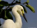 مالك الحزين .. من أكثر الطيور جمالا وشداً للإنتباه