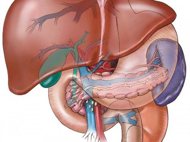 لحماية نفسك من أمراض الكبد... خطوات تخلص كبدك من السموم