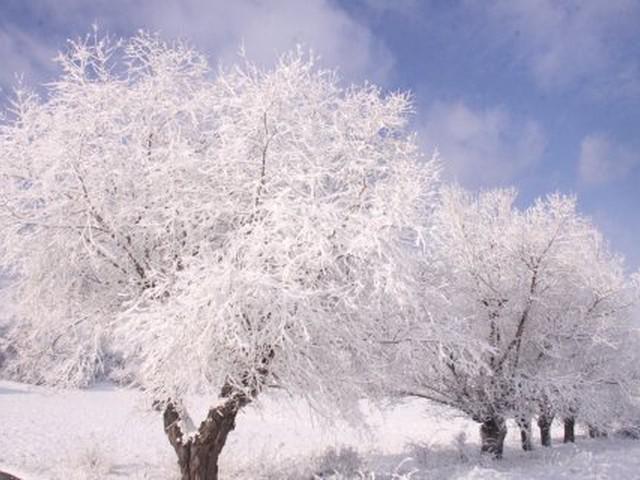 مع انتهاء المربعانية تعرف على خمسينية الشتاء.. ما هي ومتى تبدأ؟