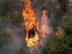 بسبب الرياح ... تجدد الحرائق في عدة مناطق لبنانية