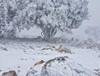 """على غير العادة .. جبال جنوب الأردن العالية على موعد مع """"ثلجة آذار"""" الاثنين"""