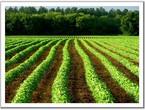 مزارعون مصريون يعتمدون على الطاقة الحيوية في مزارعهم