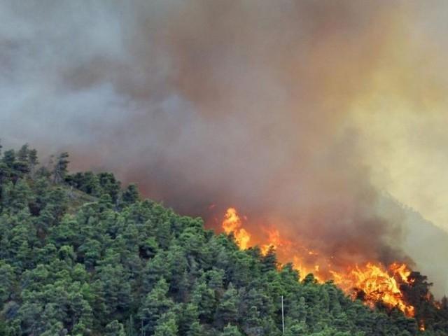 إجراءات هامة لتجنب خطر حرائق الغابات والأعشاب الجافة