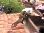 فهد يطارد سكان قرية هندية ويعض أحد الأشخاص