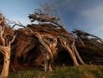 بالصور: منطقة في نيوزيلندا لاتستقيم فيها الأشجار ابداً
